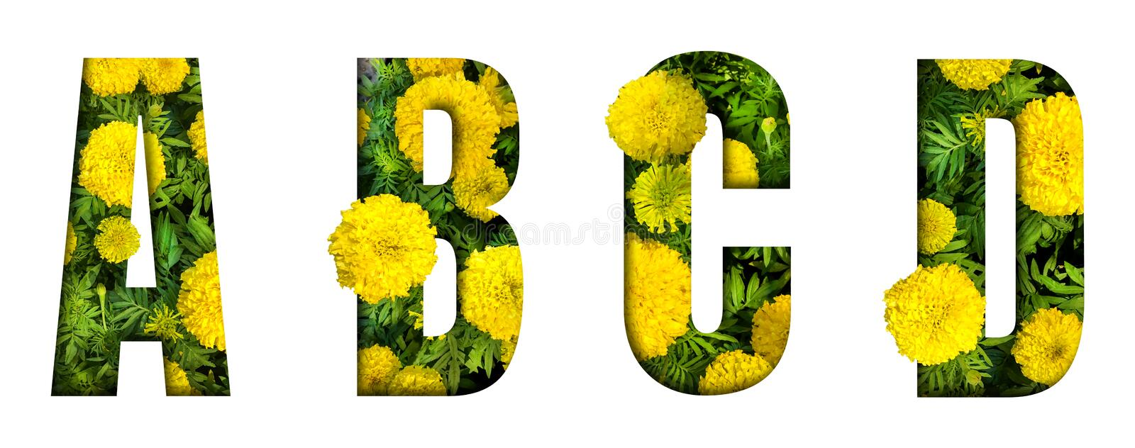 Alphabet A, B, C, D made from marigold flower font isolated on white background. Beautiful character concept stock images