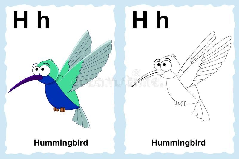 Alphabet coloring book page with outline clip art to color. Letter H. Hummingbird. royalty free illustration