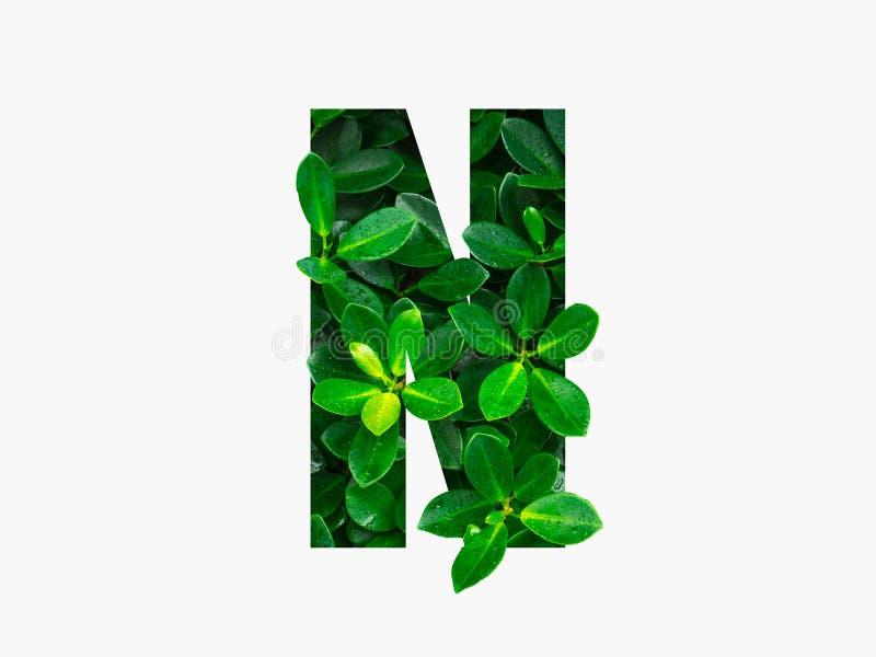 Alphabet de concept de nature des feuilles vertes dans la lettre N d'alphabet images stock