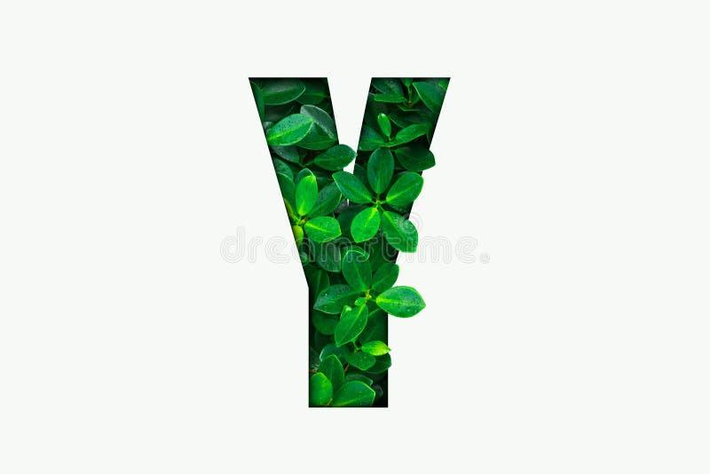 Alphabet de concept de nature des feuilles vertes dans la lettre Y d'alphabet photo libre de droits