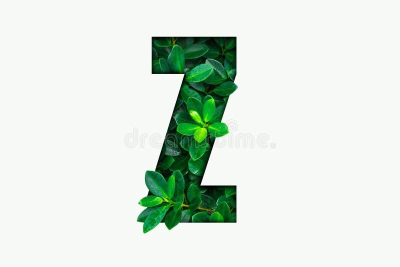 Alphabet de concept de nature des feuilles vertes dans la lettre Z d'alphabet photos libres de droits