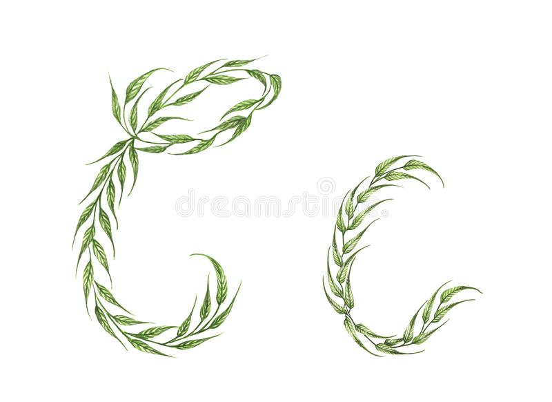 Alphabet of green leaves with letter C in small capital and large capital letter. vector illustration