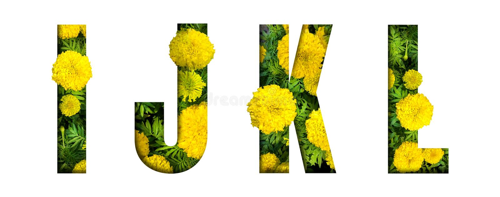 Alphabet I, J, K, L made from marigold flower font isolated on white background. Beautiful character concept. Font royalty free stock photo