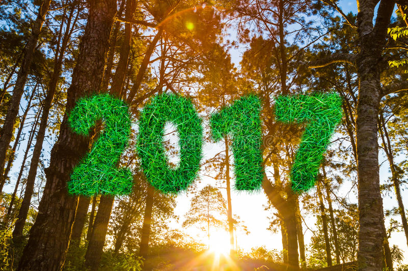 2017 alphabet number from green grass on Pine tree sunrise. New year, Mountain landscape royalty free stock photo