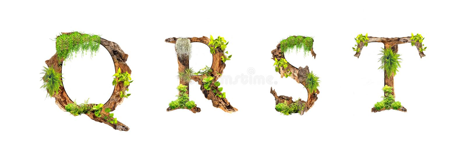 Alphabet wood and plants texture Q R S T isolated on white background. Set of Natural style Alphabet Letters stock photo