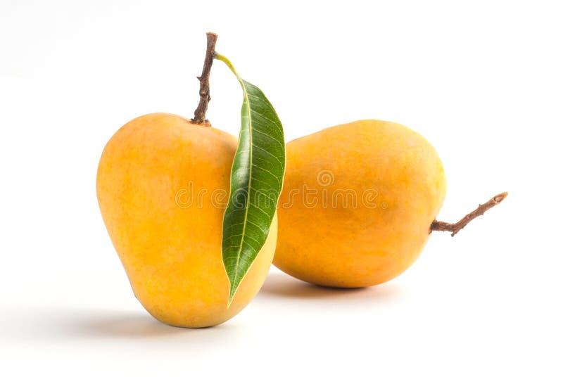Alphonso Mango stock photo