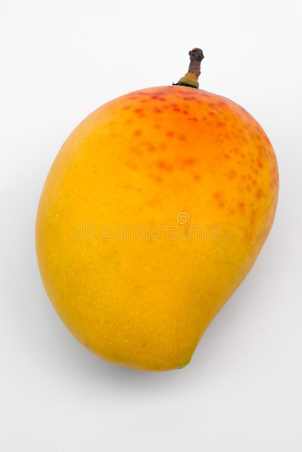 alphonso mango mangifera indica king mangoes 41767151