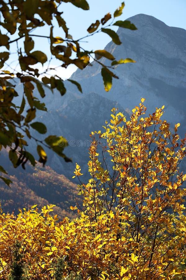 Alpi Apuane,马萨卡拉拉,托斯卡纳,意大利 山毛榉在autu离开 免版税库存图片