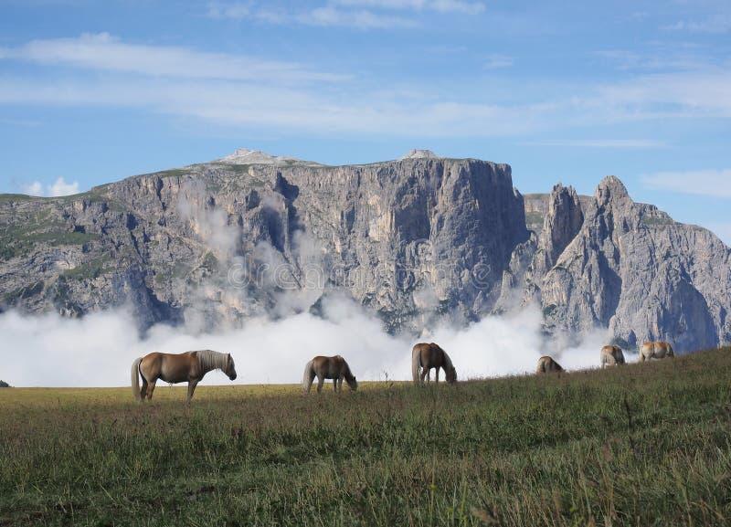 Alpi nel mio cuore fotografia stock libera da diritti