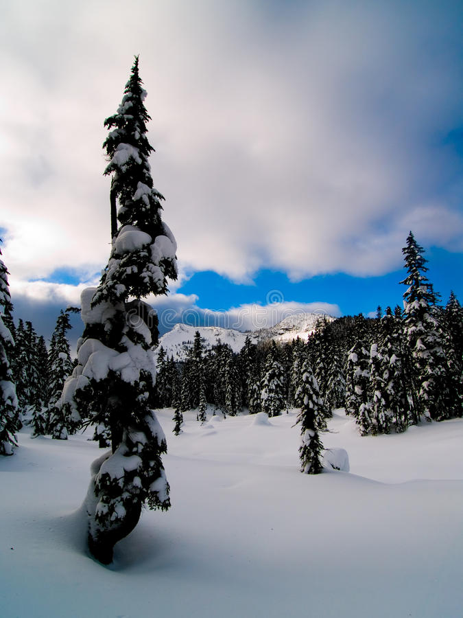 Alpien bos na een sneeuwdaling stock foto