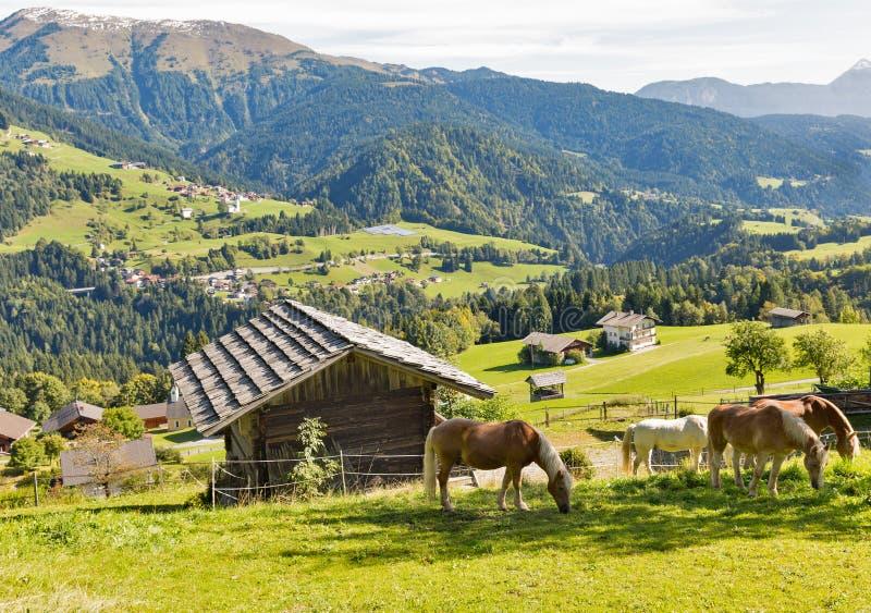 Alpien landelijk landschap met het weiden van paarden in Oostenrijk stock afbeeldingen