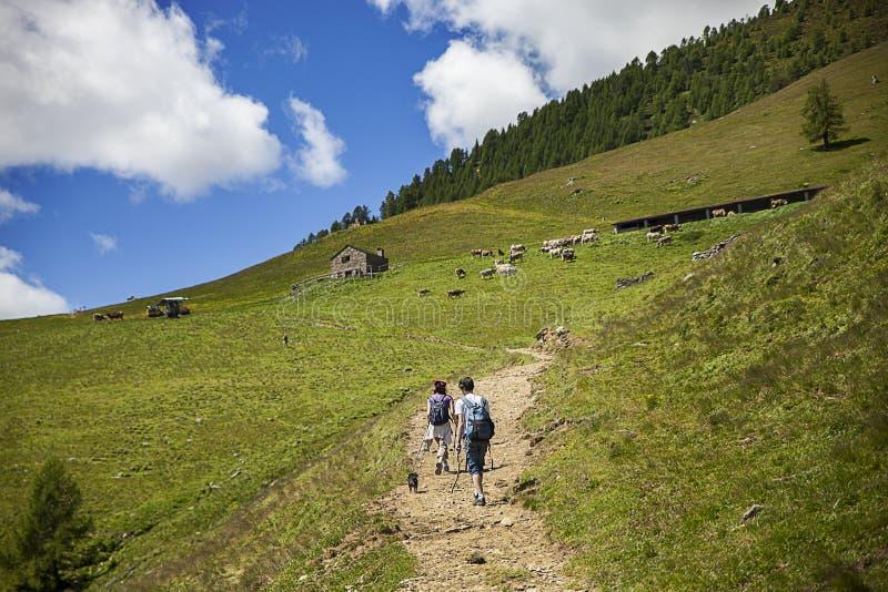 Alpien landschap royalty-vrije stock foto's