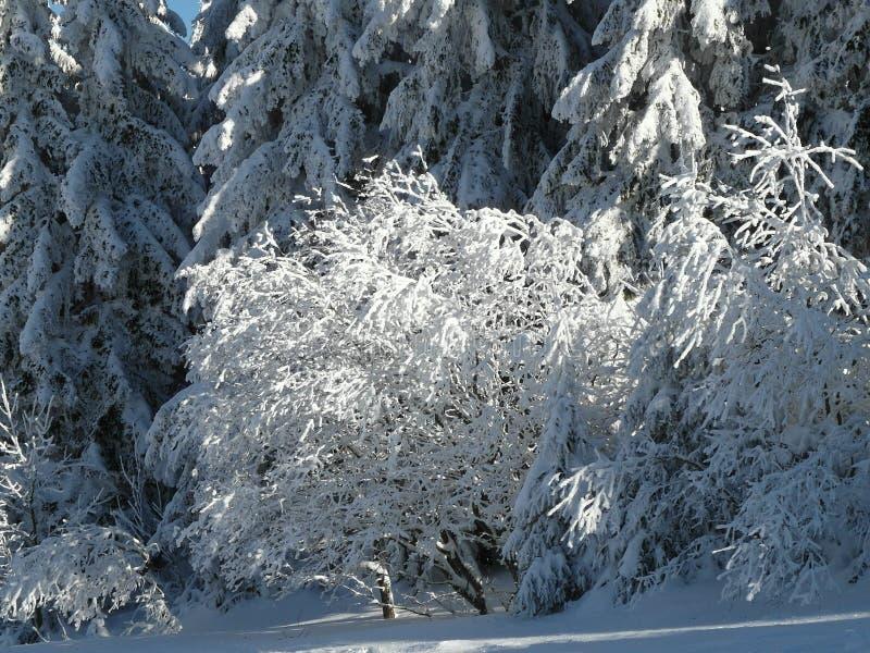 Alpien landschap in de winter onder vers sneeuwende sneeuw royalty-vrije stock foto's