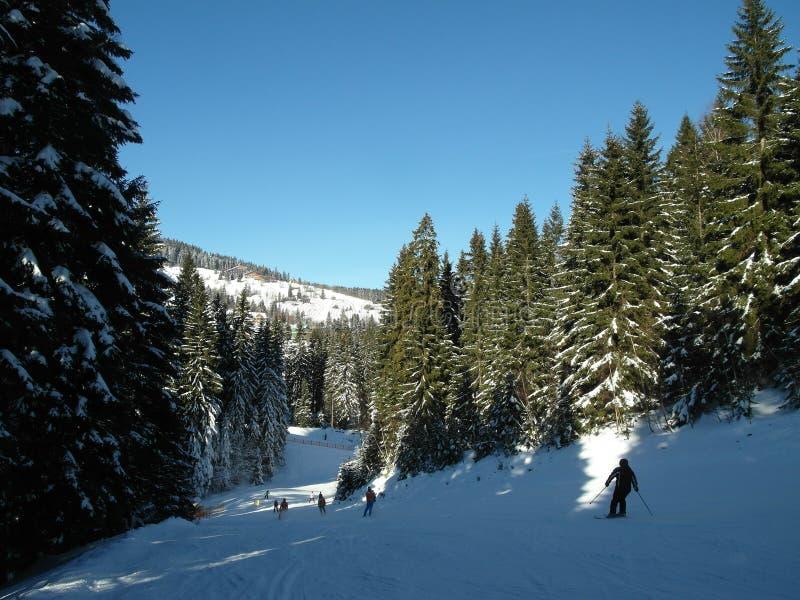 Alpien landschap in de winter onder vers sneeuwende sneeuw stock foto's