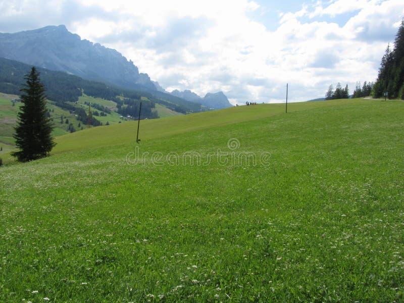 Alpien landschap met groene weilanden en sparren tegen Italiaans Dolomiet bij de zomer Weergeven van La-Villadorp, Bolzano stock afbeeldingen