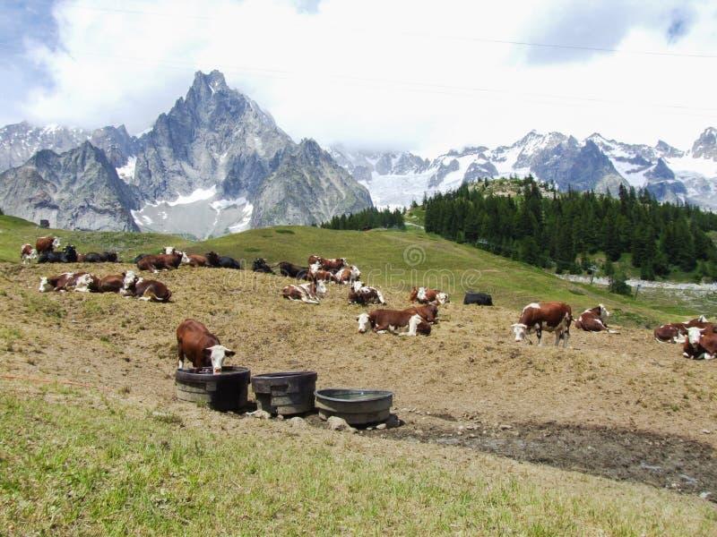 Alpien weiland royalty-vrije stock fotografie