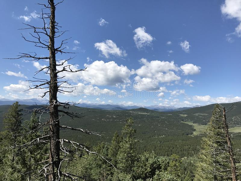 Alpiene Berg Treeline met Dode Boom stock fotografie