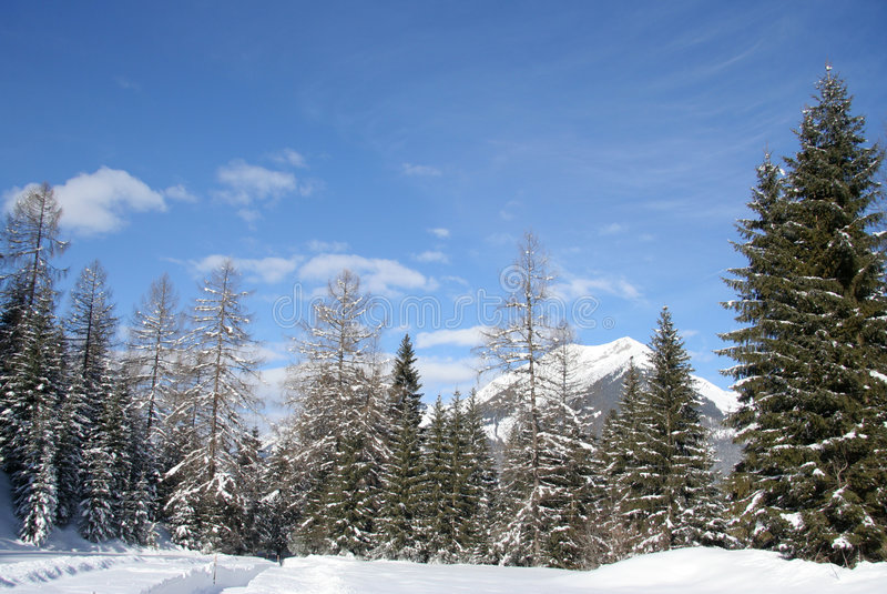 Alpiene bergtreeline stock foto