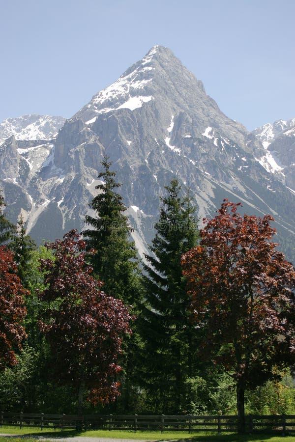 Alpiene bomen en Berg stock afbeeldingen
