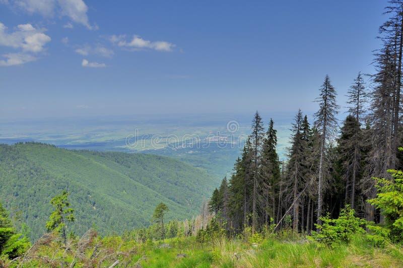 Alpiene die vallei vanaf de bovenkant wordt bekeken stock afbeeldingen