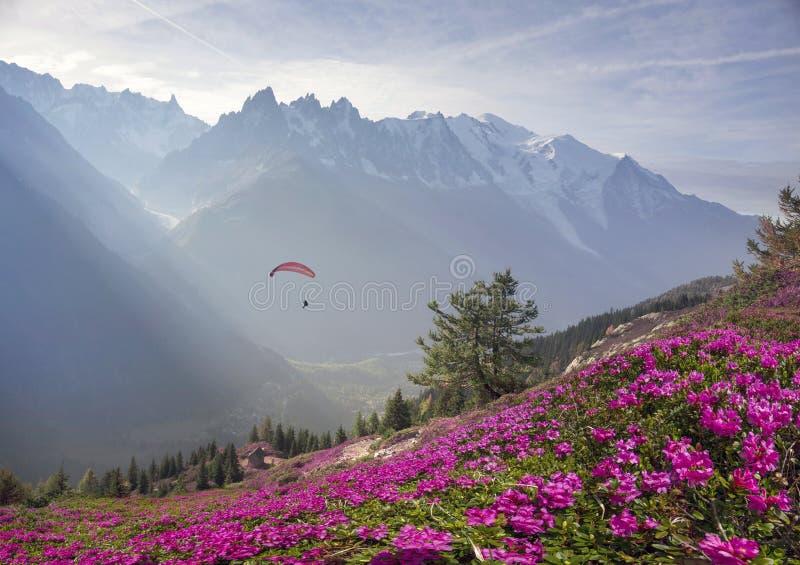 Alpiene rododendrons op de berggebieden van Chamonix royalty-vrije stock fotografie