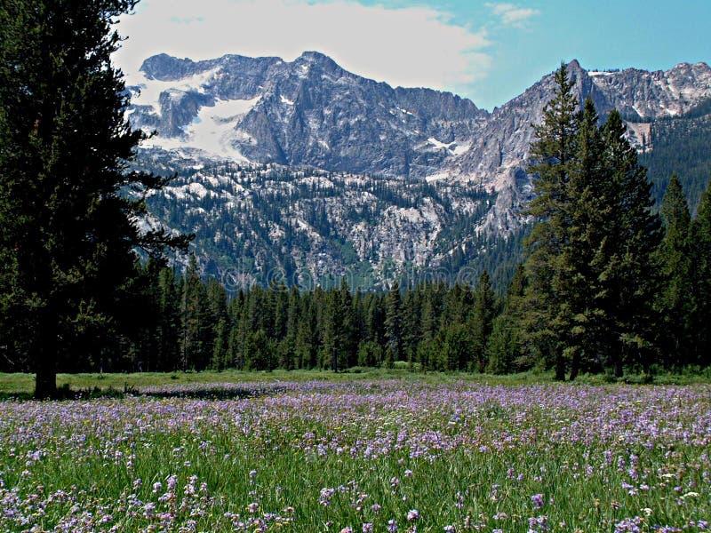 Alpiene Weide en Zaagtandbergen dichtbij Stanley, Idaho 7 royalty-vrije stock afbeelding