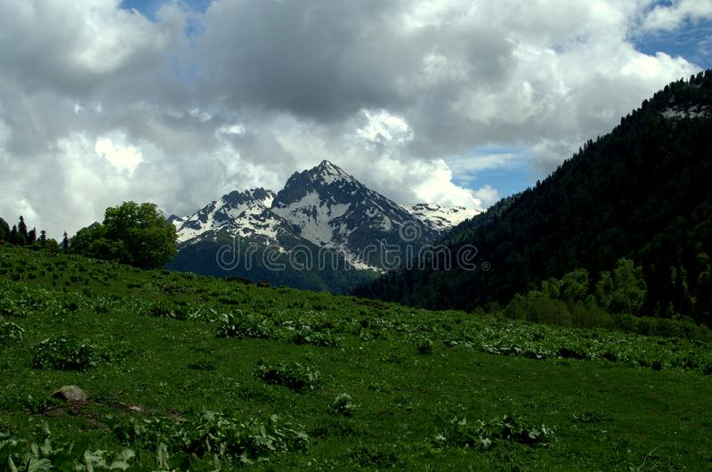 Alpiene Weiden stock fotografie