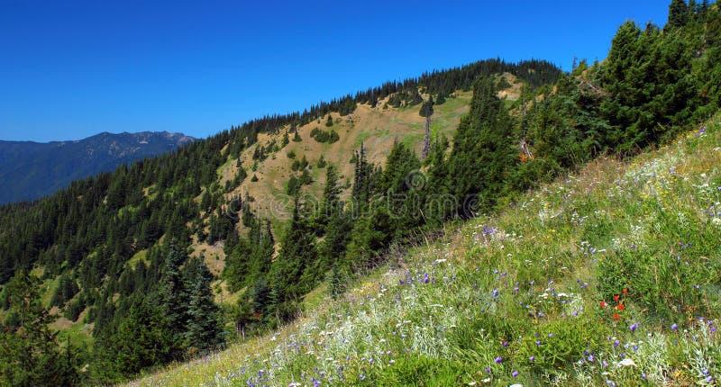 Alpiene Weiden, Olympisch Nationaal Park, Washington stock afbeelding