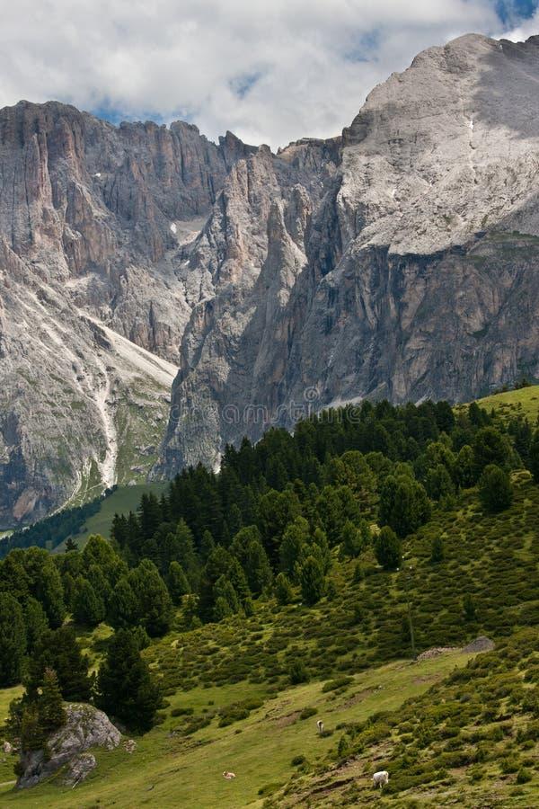 alpin älskvärd landskapsommar fotografering för bildbyråer