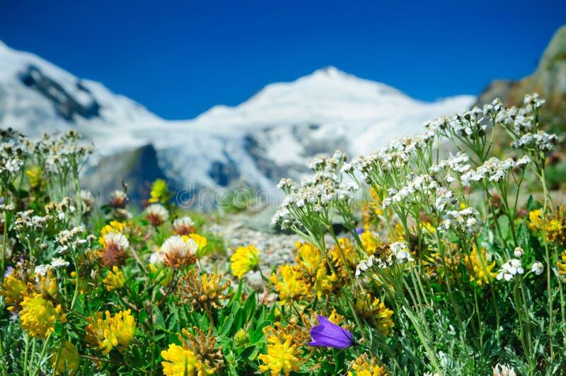 alpin äng royaltyfria bilder