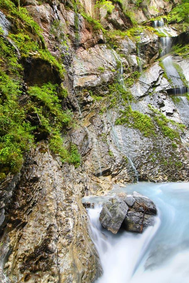 alpin bäck arkivfoton