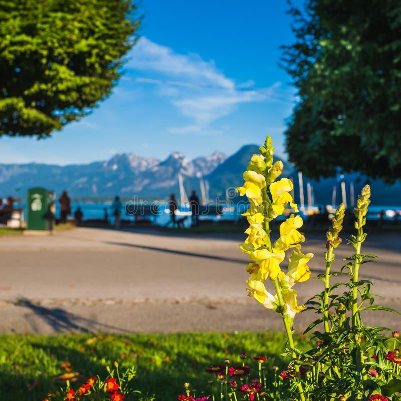 Alpin Lakeside med en härlig gul blomning i Foregrouen arkivfoton