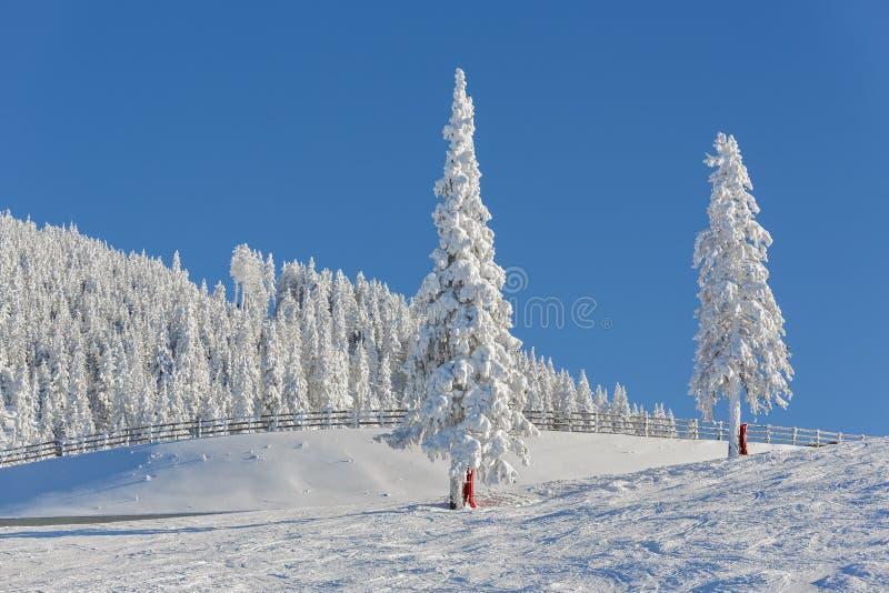 alpin liggandevinter arkivbild