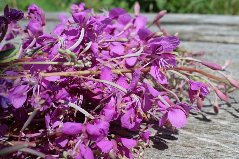 Alpin maler blommar bakgrundsbilden som är härlig, drinken, blomman som blommar, flora som är blom-, blommor, mat, grönt som är s royaltyfri foto