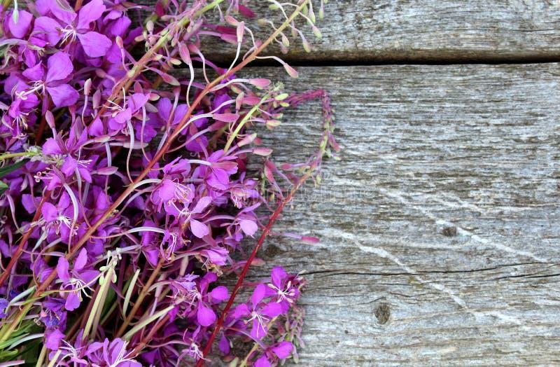 Alpin maler blommar bakgrundsbilden som är härlig, drinken, blomman som blommar, flora som är blom-, blommor, mat, grönt som är s fotografering för bildbyråer