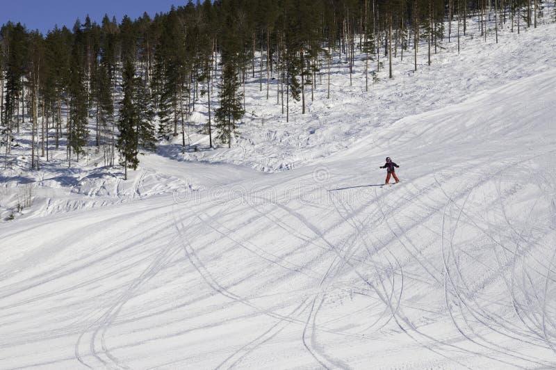 alpin mountane storklinten royaltyfri foto