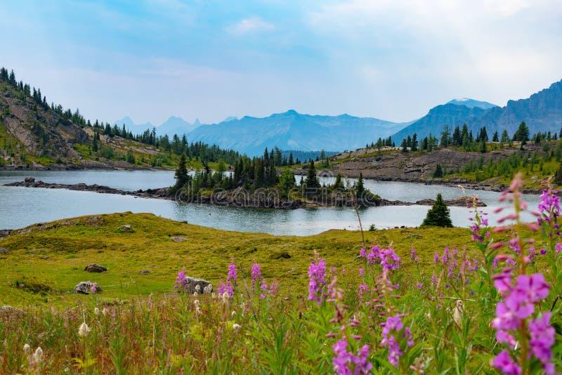 Alpin sjö och berg i solskenängar, Alberta arkivbilder