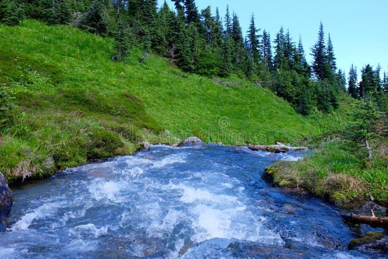 Alpin snabb flod och ängar royaltyfri bild