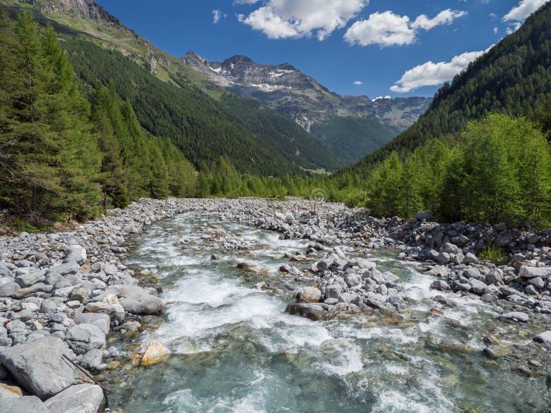 Alpin Val Sissone dal med floden, lärkträd och berg arkivbilder
