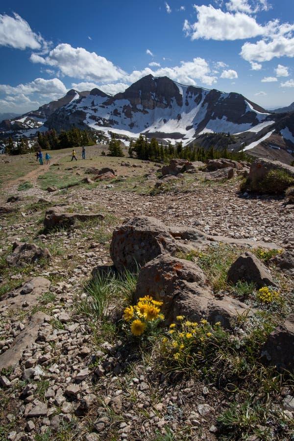 Alpin vildblomma ovanför den Teton byn, lodlinje royaltyfri fotografi
