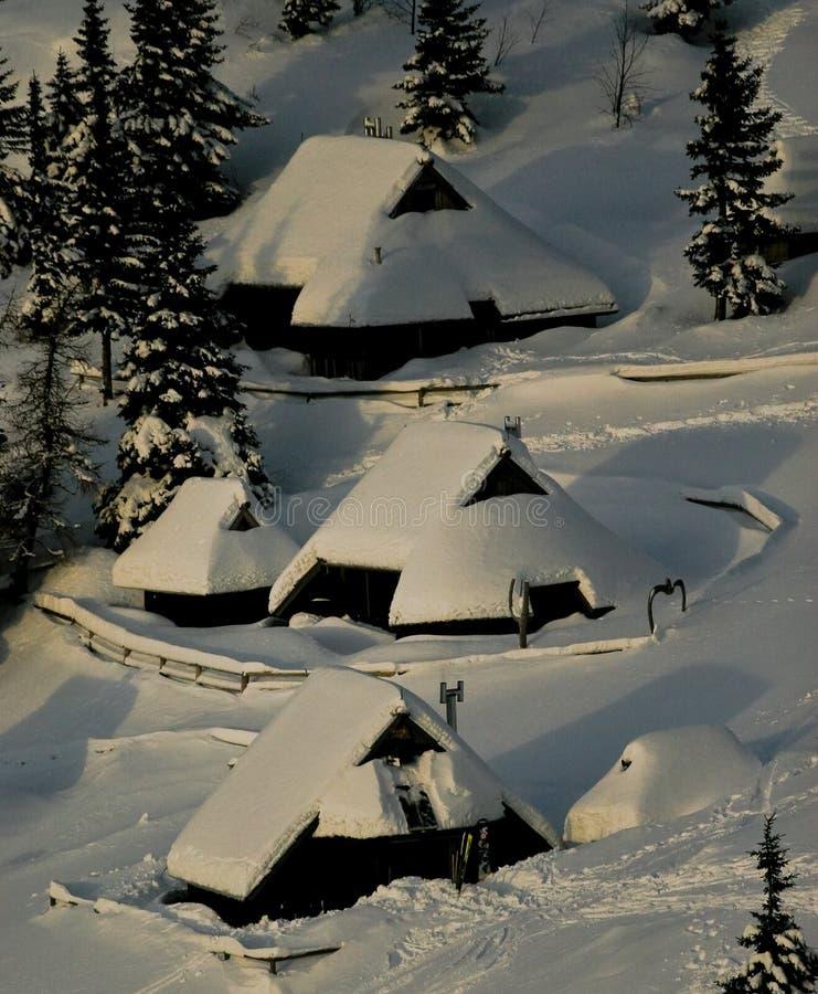 alpina kojor royaltyfria bilder
