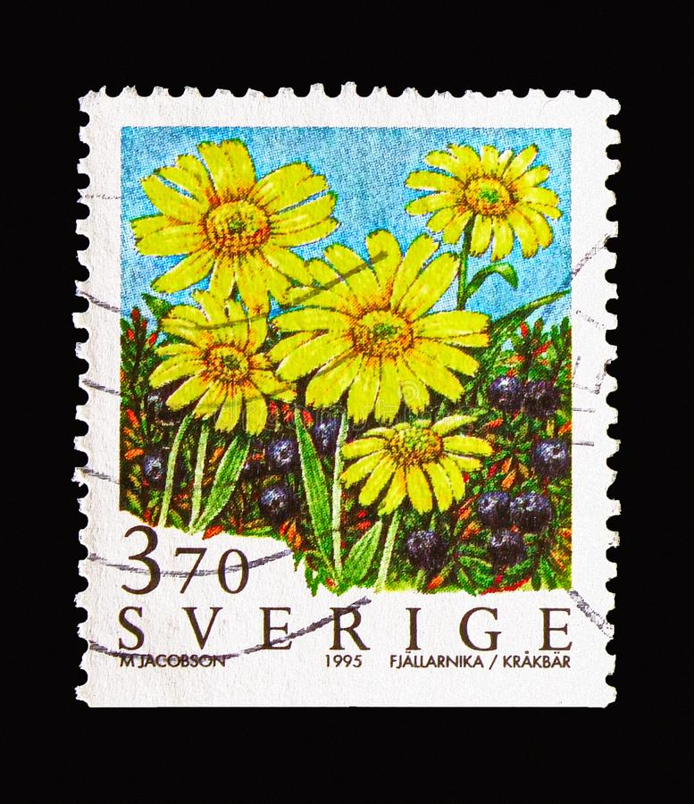 Alpine arnica (yellow flowers) and crowberry, Mountain Flowers s. MOSCOW, RUSSIA - AUGUST 18, 2018: A stamp printed in Sweden shows Alpine arnica (yellow flowers royalty free stock image