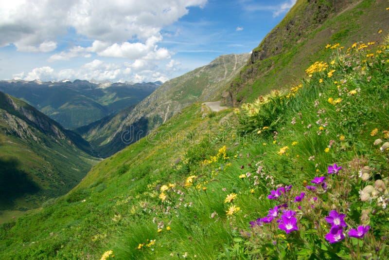 Alpine Berge des Sommers stockbilder