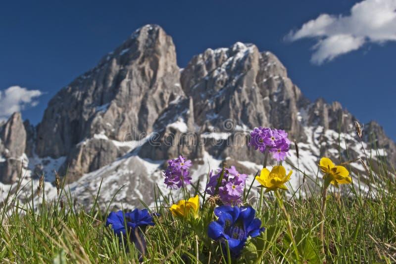 Alpine Blumen stockfotos