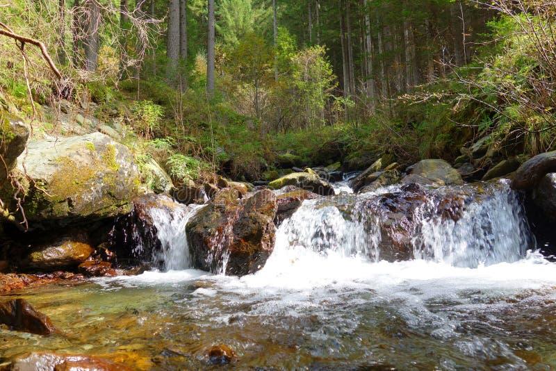 Alpine Creek images stock