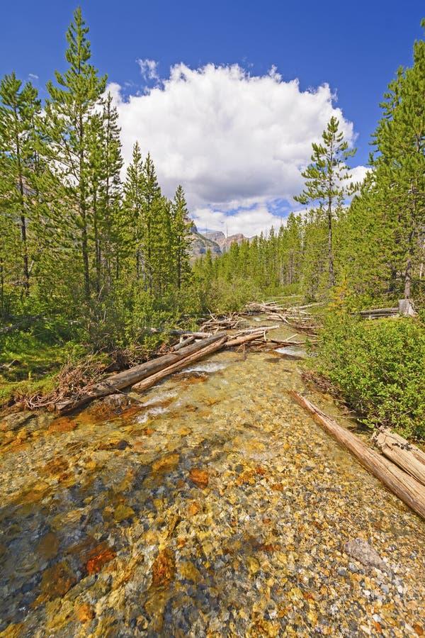 Alpine Creek en un día de verano imagenes de archivo