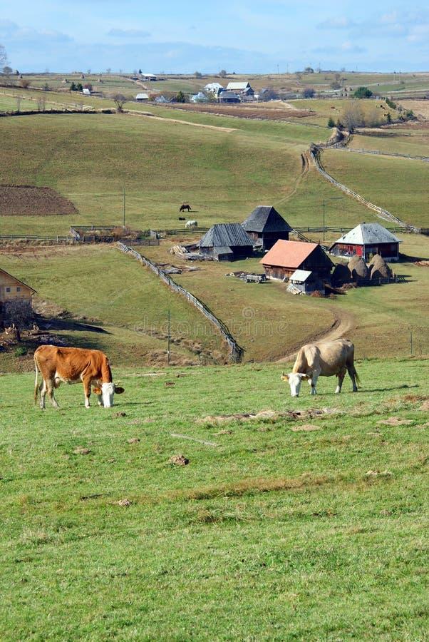 Alpine farm royalty free stock image