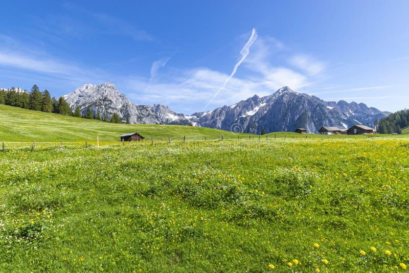 Alpine flower meadows with majestic Karwendel Mountain Range. Photo taked near Walderalm, Austria, Gnadenwald, Tyrol stock images