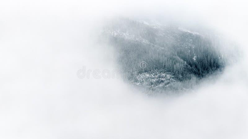 Alpine forest through fog stock photography