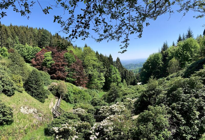 Alpine garden park in the Italian Alps. Valdilana. stock image